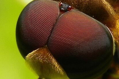 根据苍蝇反应快,天津大学精密仪器与光电子工程学院新型仿生复眼视觉系统